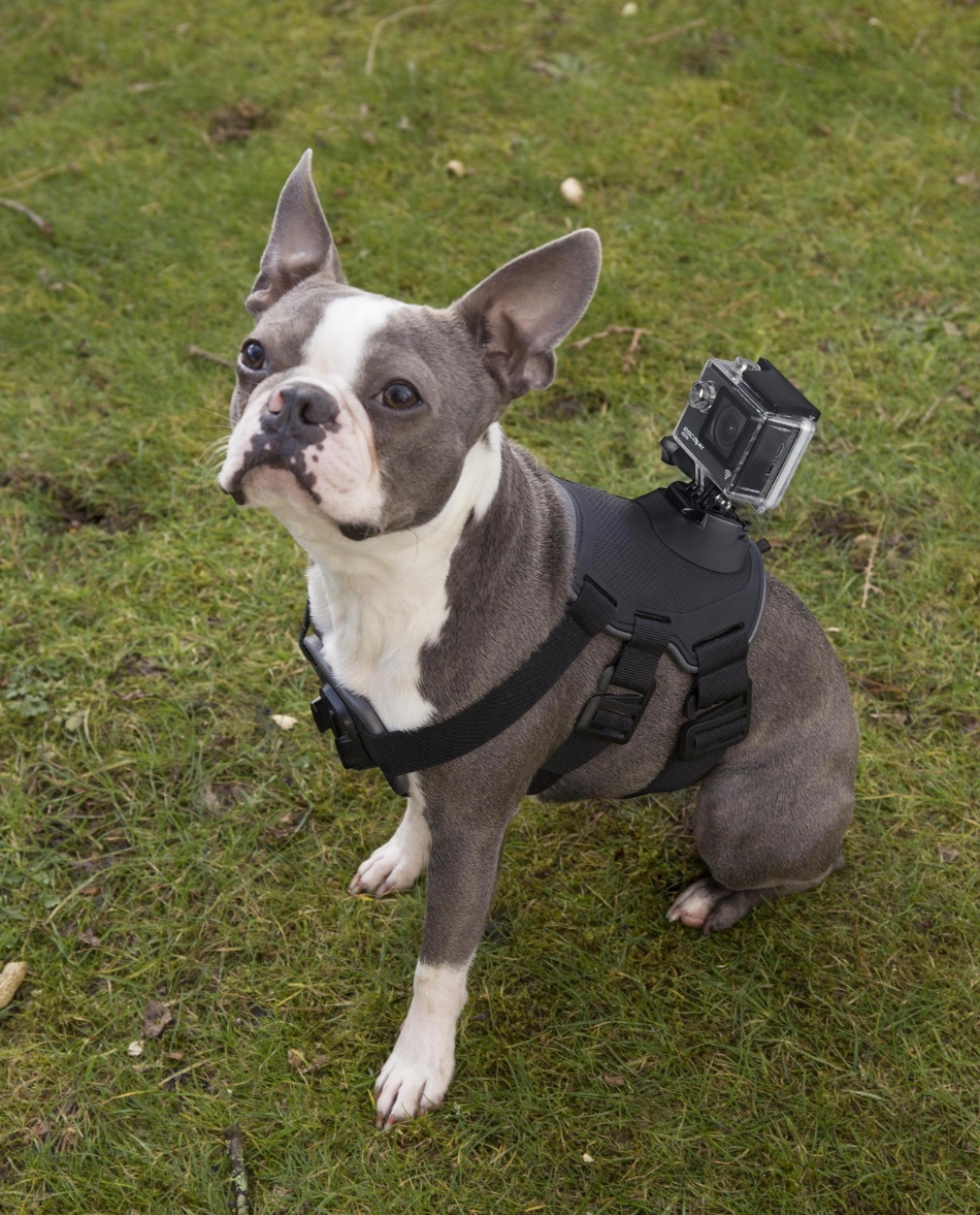 Accesoriu KitVision de fixare camera actiune pe caini, talie universala 7